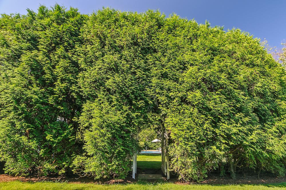 Hedges, Southampton, NY Long Island, New York