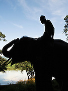 Mahout at Anantara Golden Triangle resort.