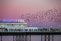 © Licensed to London News Pictures. 26/02/2019. Brighton, UK. Thousands of starlings take to the sky over the Brighton Palace Pier before descending to roost for the night on the legs underneath the Brighton and Hove seaside pier. Photo credit: Hugo Michiels/LNP