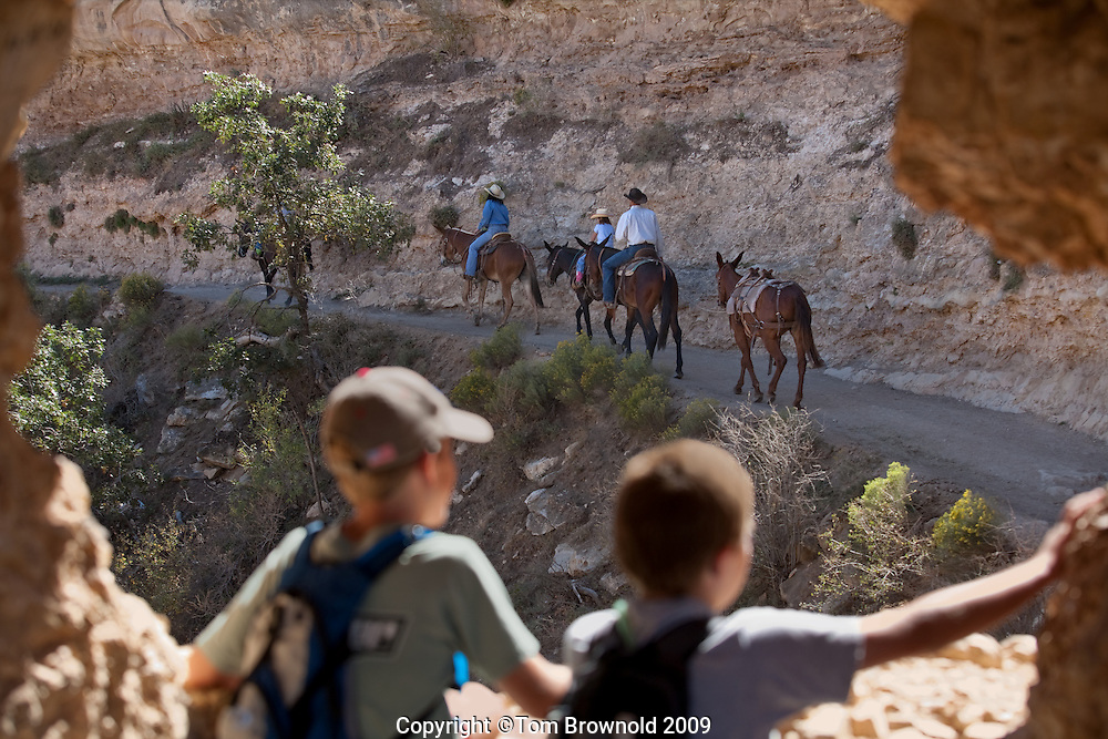 Boys watching the Mule riders on the Bright Angel trail