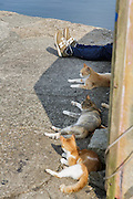 Aoshima, Ehime prefecture, September 4 2015 - Tourists and cats lazing near the harbour.<br /> Aoshima (Ao island) is one of the several « cat islands » in Japan. Due to the decreasing of its poluation, the island now host about 6 times more cats than residents.