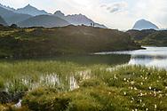Zwei Frauen wandern bei den Crap Alv Laiets in der N&auml;he des Albulapasses mit Blick auf den Piz Murtel Trigd, den Piz Palpuogna und den Piz Ela, Parc Ela, Graub&uuml;nden, Schweiz<br /> <br /> Two women are hiking at the Crap Alv Laiets close to the Albula Pass with the Piz Murtel Trigd, Piz Palpuogna and the Piz Ela in sight, Parc Ela, Grisons, Switzerland