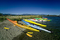Bright and colorful kayaks hauled up in the Comox Bay.  Kayaking is a very popular recreational activity given the proximity of water and islands that one can explore near the many communities on Vancouver Island.  Comox Valley, Vancouver Island, British Columbia, Canada.