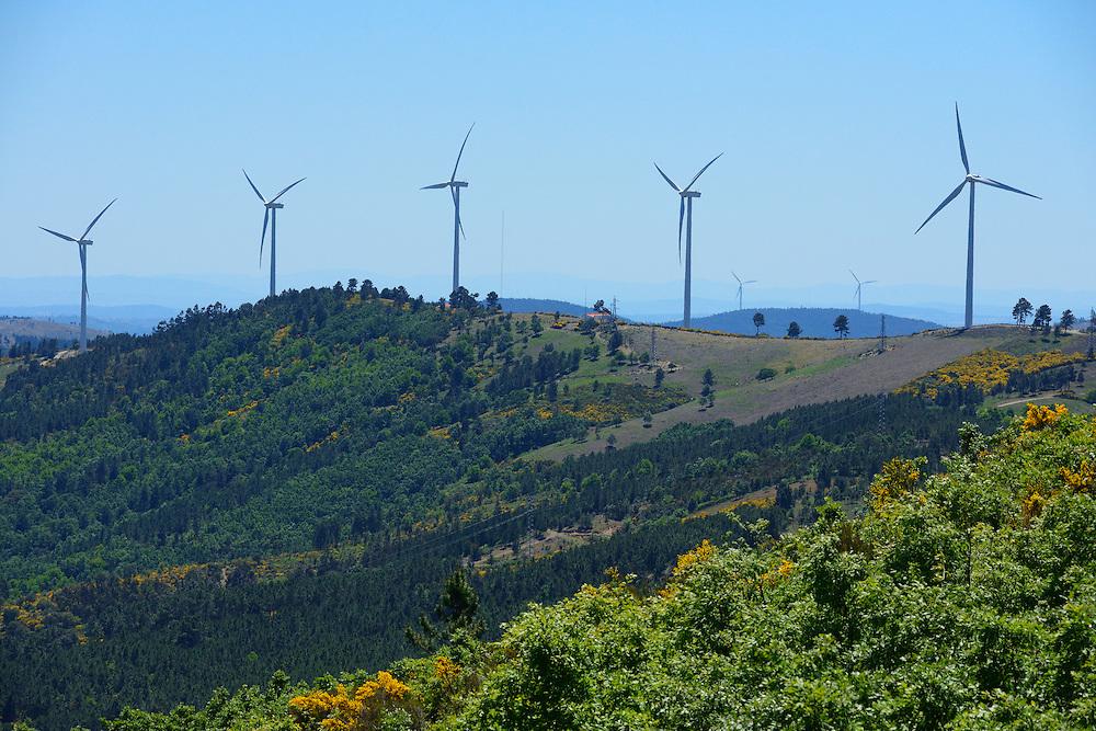 Wind farms, causing great risks for soaring raptors, like the Black vulture , Aegypius monachus, Sierra de Gata, Spain