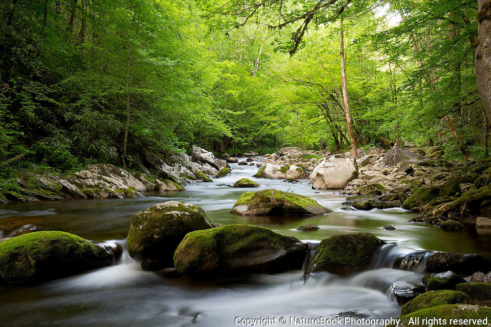 Spring is in full swing in the Smokies as the rocks and quiet stream fill the mind with solitude and beauty.