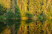 Morning light on a wetland reflection<br /> Ear Falls<br /> Ontario<br /> Canada