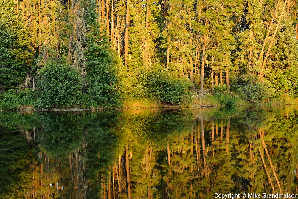 Morning light on a wetland reflection<br /> Ear Falls<br /> Ontario<br /> Canada
