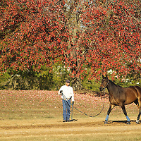 Lexington mounted police officer Dan Haun warmed up his horse, Adam, near a turning maple tree during the Alltech FEI World Equestrian Games at the Kentucky Horse Park on Thursday, October 7, 2010. Photo by David Stephenson