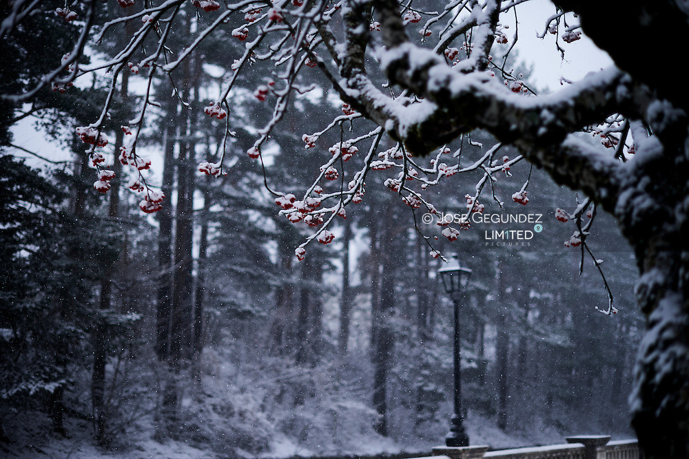 Snowy streetlight at forest under the red tree