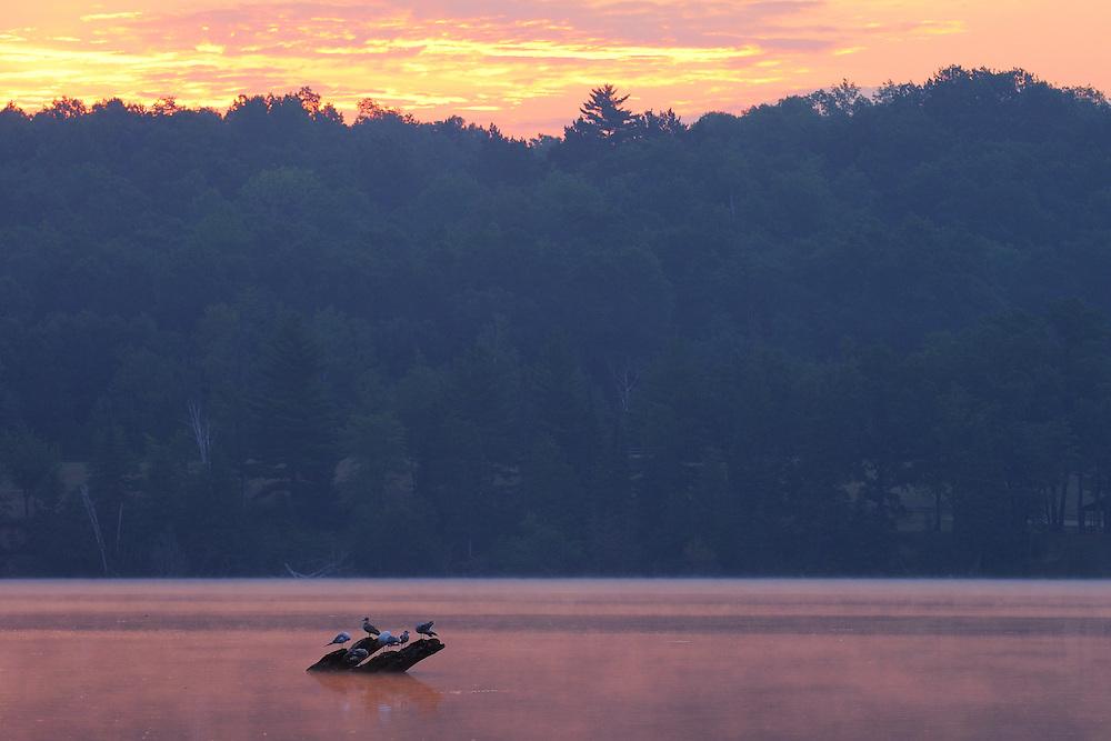 Alcona Pond,<br /> Glennie, Michigan