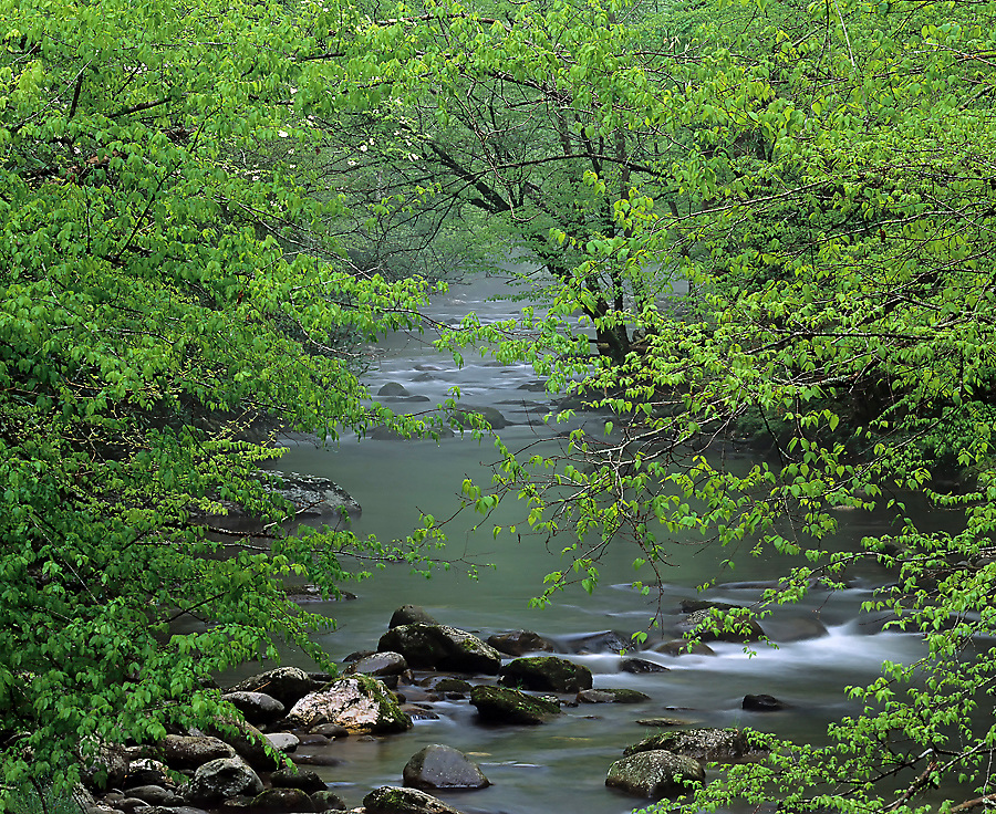 SMOKIES IN THE SPRING