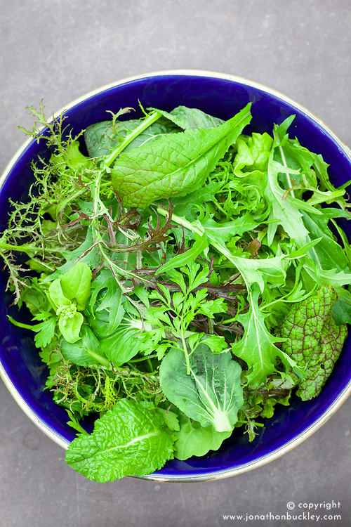 Summer salad leaf mix in a blue bowl. Mustard 'Red Frills', Mustard 'Red Zest', Mizuna, Tatsoi, Pak Choi 'Golden Yellow', Pak Choi 'Canton White'