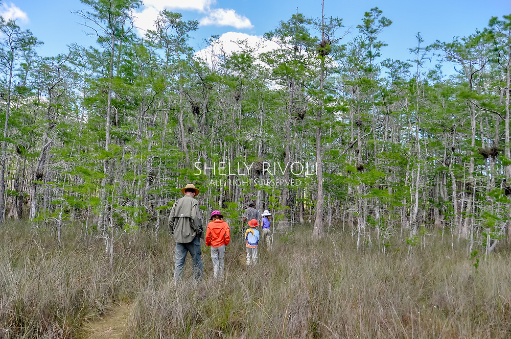 A family explores Big Cypress National Preserve on foot led by a guide.
