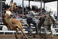 Tie-down Roper competes, 26 July 2007, Cheyenne Frontier Days