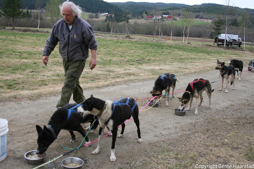 John Fagerlund i Trondheim har drevet med trekkhunder i 12 år, men kun for besøkende fra barnehager og skoler. Til vanlig kjører han hundeslede i Bymarka i Trondheim, men i Selbu ble det på grunn av føret hundekjøring med vogn, og teamet er allerede hyret til neste år. Hundene er huskyer blandet med vorsteh og setter som Fagerlund kjøper fra profesjonelle hundekjørere. De fleste oppkalt av eller etter barnehagebarn. Først Siv og Ella, deretter Arta og Simba, Mikkel og  Buster, Bromle og til slutt Buck. Foto: Bente Haarstad