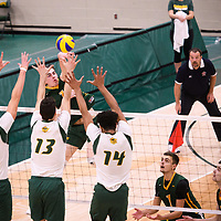 2nd year Right-Side hitter Matthew Aubrey (7) of the Regina Cougars in action during Men's Volleyball home game on November 3 at Centre for Kinesiology, Health and Sport. Credit: Casey Marshall/Arthur Images