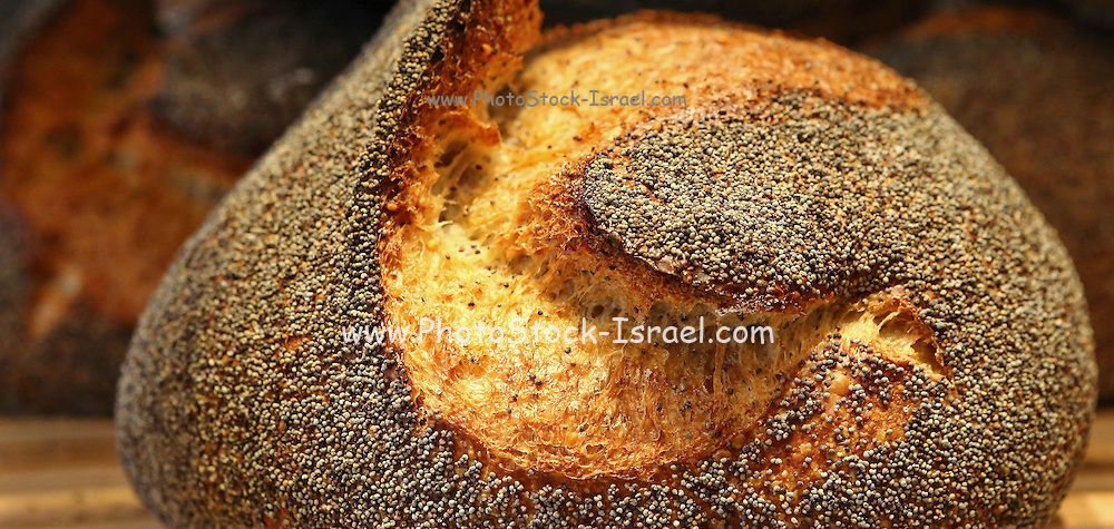 """Freshly baked loaf of bread at a bakery. This image was part of a photo exhibition """"Let there be Bread"""" by Oren Shalev in the Eretz Israel Museum in Tel Aviv, Israel. The motif of the exhibition was bread. Such a basic food yet so complex and diverse. The images were produced by following the nightly work at a bakery from start to finish. To view all images from this exhibition please search for breadexhibition"""