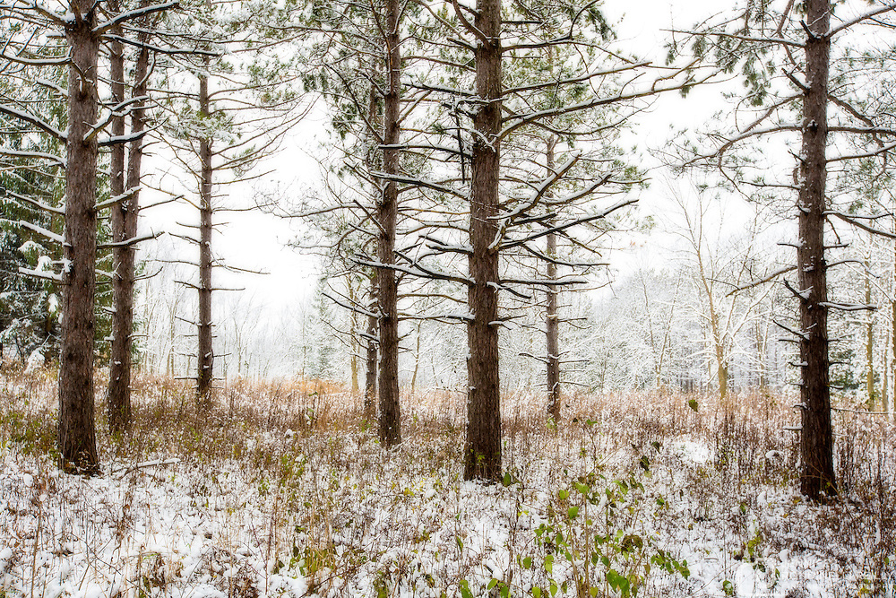 Photo taken at Retzer Nature Center in winter after snowfall.