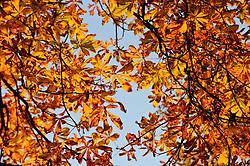10.10.2010, Knittelfeld, AUT, Herbst Features, Bild zeigt Herbststimmung mit Bäumen und bunten Blättern, EXPA Pictures © 2010, PhotoCredit: EXPA/ S. Zangrando