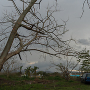 OCTOBER 6, 2017--RINCON, PUERTO RICO ---<br /> Damage to trees and properties on the West coast of Puerto Rico following the path of Hurricane Maria through Puerto Rico.<br /> (Photo by Angel Valentin/Freelance)