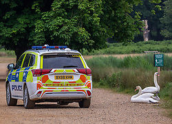 © Licensed to London News Pictures. 10/06/2020. London, UK. The surviving cygnet sibling is shielded by its parents as Police patrol Pen Ponds in Richmond Park after a newborn cygnet received life threatening injuries when a runner kicked it out of his way. The young swan which is on death's door is being cared for by a swan specialist centre. Parks Police have appealed for witnesses. Photo credit: Alex Lentati/LNP