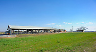 Ferguson Dairy Center at Oklahoma State University<br /> Free Stall Barn and other new facilities are being prepared.Ferguson Dairy Center at Oklahoma State University<br /> Free Stall Barn and other new facilities are being prepared.