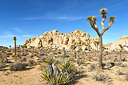 Rock Climbers at Joshua Tree National Park