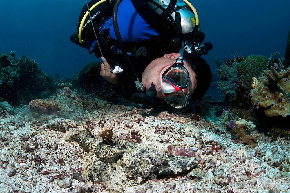 Diver investigating Crocodile Flathead.Shot in West Papua Province, Indonesia