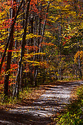 Balsam Mountain road at foliage peak