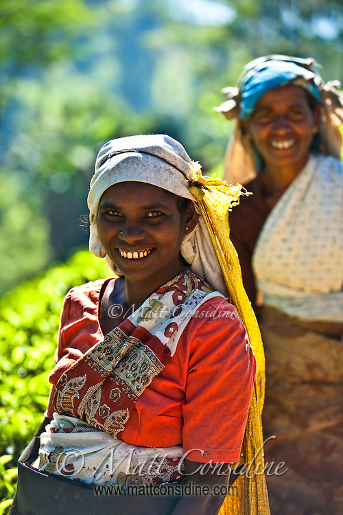 Tea pickers in the clear highland air of Sri Lanka.<br /> (Photo by Matt Considine - Images of Asia Collection)