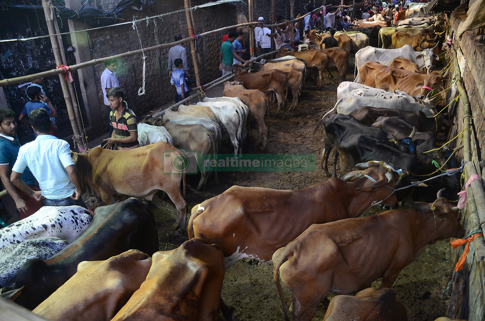 August 31, 2017 - Kolkata, West Bengal, India - Indian Muslim sales cow at a live stock market ahead of Eid al-Adha in Kolkata. Busy livestock market ahead of Eid al-Adha festival on August 31, 2017 in Kolkata. Eid al-Adha also called the Sacrifice Feast or Bakri-Eid celebrated worldwide annually honoring the willingness of Ibrahim to sacrifice his son Ismaeel as act of God command, before he scarified his son God intervened by sending angel Jibrail to inform Ibrahim that his sacrifice is accepted. (Credit Image: © Saikat Paul/Pacific Press via ZUMA Wire)
