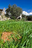 La primavera nella campagne comincia a diffondersi attraverso la crescita dell'erbetta, di fiori creando un suggestivo contrasto con gli alberi ed il cielo. Vecchio casolare abbandonato e crollato.