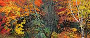 Autumn Forest, Baxter State Park, Maine