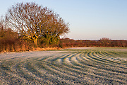 Frosty morning in Little Chalfont in Bucks