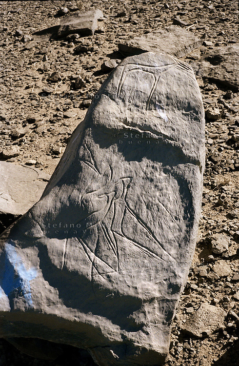 """The prehistory of Western Sahara in a regional context: the archaeology of the """"free zone""""..Rock-art: prehistoric engravings on stone slabs in open air near track running from .Tindouf/Rabuni to Bir Lahlou and Tifariti. Estimated age of engravings: 4000-2000 before present, possibly earlier. Faunal assemblage.Rock substrate: Devonian sandstone"""