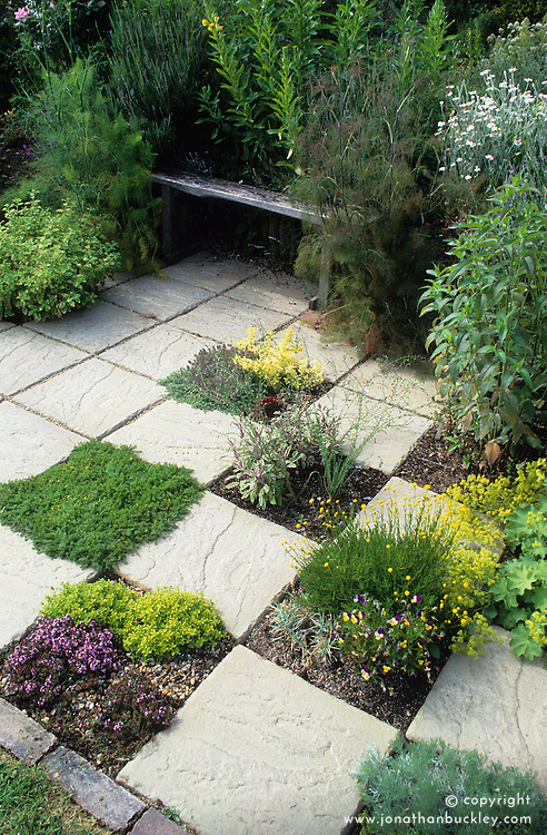 Herb garden with herbs planted in paving in a chequerboard pattern. Slabs removed to create planting pockets. Planting includes thyme, camomile, salvia, santolina', Viola tricolor