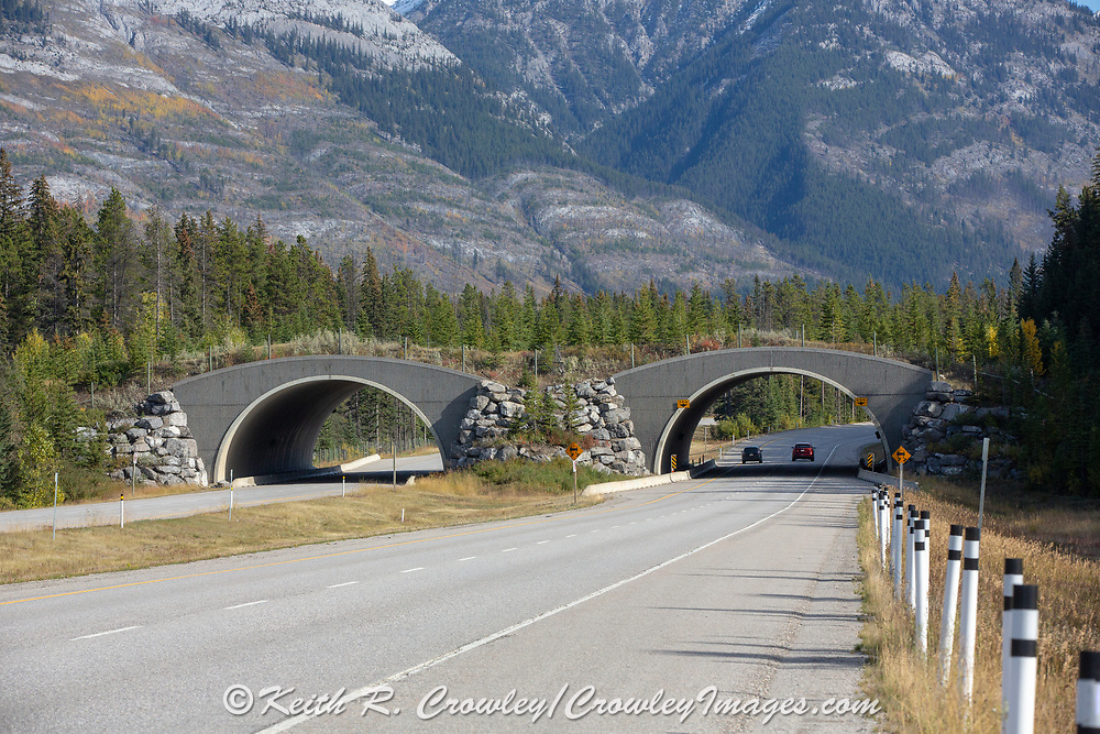 Wildlife bridge in Banff National Park, ALberta, CA.