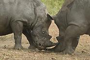 Hluhluwe & Imfolozi Game Reserve