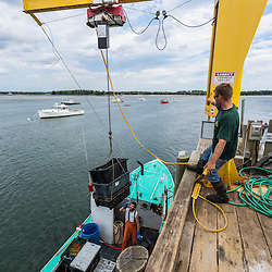 "Captain Travis Turner (green shirt) raises lobsters up from his boat ""Barbara Jean"" at Pine Point in Scarborough, Maine. Sternman Alexander Thomas is on the boat."