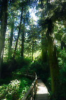 Pacific Rim National Park Rainforest trail in beautiful glowing sunlight. Tofino, Vancouver Island, BC, Canada.