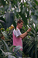 Council Parks Dept Nurseryman at work in a greenhouse ......