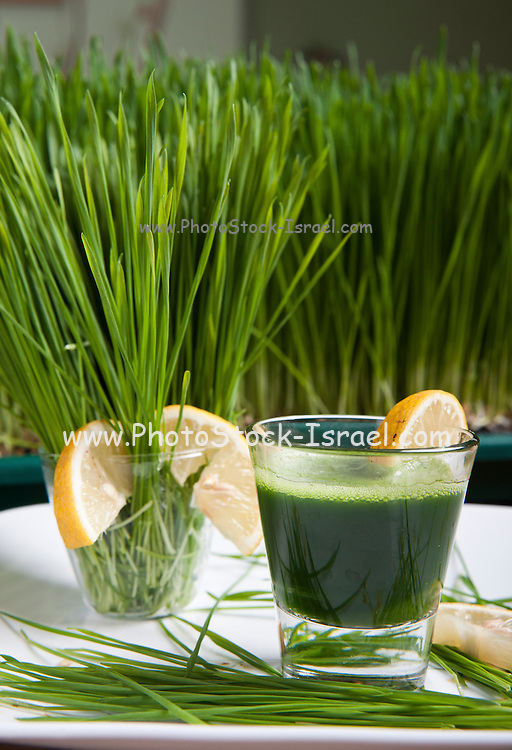 Wheat Grass sprouts and Wheatgrass drink