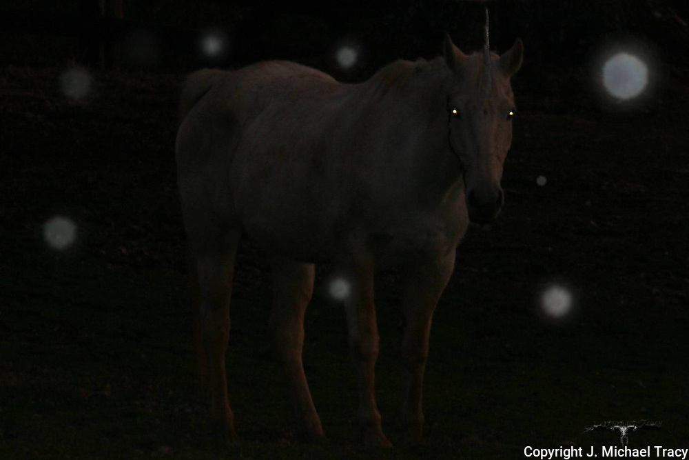 A Unicorn surrounded by orbs steps out from the forrest long enough to get photographed.