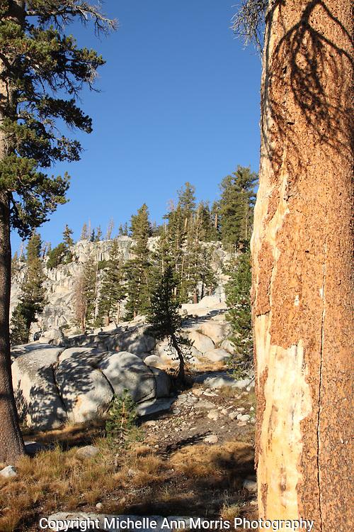 Yosemite National Park Tuolumne Meadows Backpacking