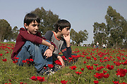 two young boy Admiring the red poppies