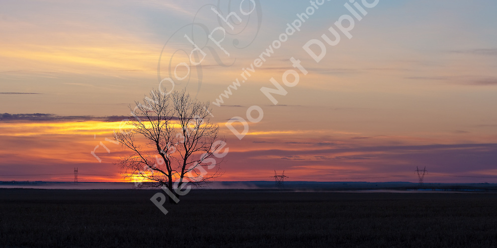 I was out for an early trip to Frank Lake to make images of birds during the spring migration and foudn this wonderful scene just before the sunrise.  I love the solitary tree in the middle of the field silhouetted against the rising sun...©2009, Sean Phillips.http://www.Sean-Phillips.com