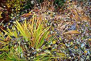 USA, Idaho, McCall, Fallen Leaves in a garden