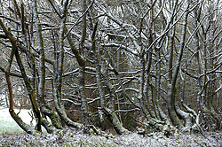 © Licensed to London News Pictures. 12/02/2017. Clun, Shropshire, UK. Light snowfall is seen near the town of Clun in Shropshire, UK. Photo credit: Graham M. Lawrence/LNP