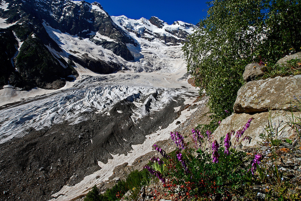 Russia, Caucasus, Alibek glacier in Alibek vally near Dombay with Purple trefoil (Trifolium) in front.