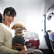 """CHIBA, JAPAN - JANUARY 27 : A woman and his dog are seen in a plane in Chiba, Japan on January 27, 2017. Japan Airlines """"wan wan jet tour"""" allows owners and their dogs to travel together on a charter flight for a special three-day domestic tour to Kagoshima Prefecture, southwestern Japan. As part of the package tour, the owners and their dogs will also get to stay together in a hotel and go sightseeing in rented cars. (Photo by Richard Atrero de Guzman/ANADOLU Agency)"""